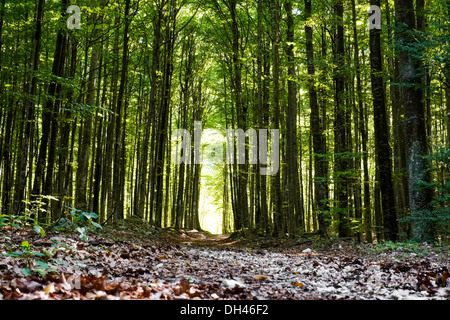 Footpath in a forest in Slovenia - Stock Photo