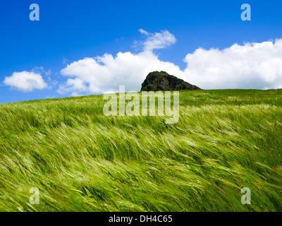 Pietra Parcellara with wheat field in spring in Val Trebbia, Piacenza, Italy - Stock Photo