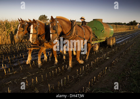Amish farmer spreading liquid manure from his cows on a corn field that was recently harvested on his farm in Oxford, - Stock Photo