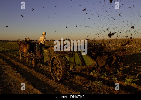 Amish farmers spreading manure from his cows on a corn field that was recently harvested on his farm in Oxford, - Stock Photo