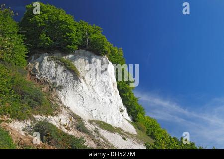 Chalk cliffs, Baltic Sea coast, beech grove, UNESCO World Heritage Site, Jasmund National Park, Isle of Ruegen - Stock Photo