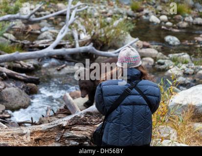 Woman photographs black bear at Taylor Creek in South Lake Tahoe - Stock Photo