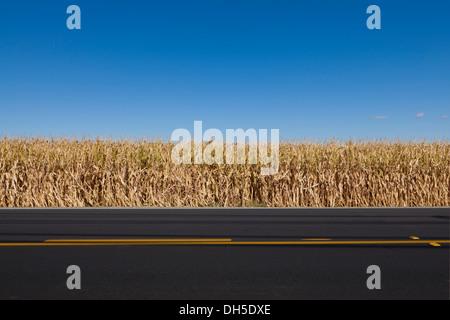 Corn field edge in fall - California USA - Stock Photo