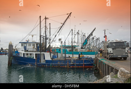 Fishing trawler unloading catch in harbour at Port Lincoln on Eyre Peninsula South Australia - Stock Photo