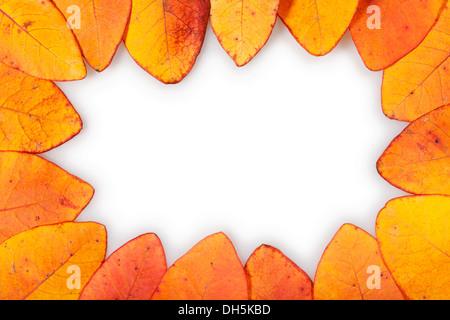 autumn leaves border on white - Stock Photo