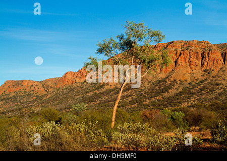 Spectacular view of Australian outback landscape at dawn - full moon, rugged cliffs, solitary tree at Finke Gorge - Stock Photo