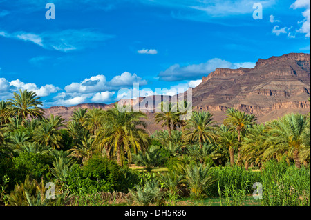 Palm grove with date palms (Phoenix) and small fields in front of the Djebel Kissane table mountain, mountain range, - Stock Photo