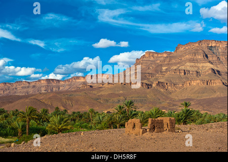 Decaying mud brick house in front of a palm grove with date palms (Phoenix) in front of the Djebel Kissane table - Stock Photo