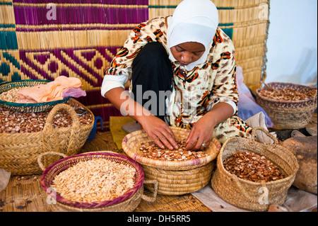 Woman sorting argan nuts into baskets for the preparation of argan oil, Anti-Atlas or Lesser Atlas mountain range - Stock Photo