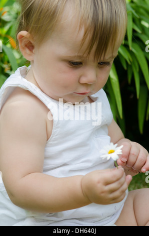 Nine month old baby girl holding a daisy Marguerite in garden. UK. August. - Stock Photo