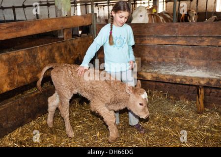 Girl with newborn calf in a stable, Austria, Europe - Stock Photo