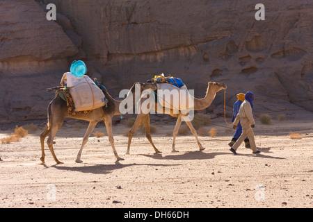 Camel caravan in the Libyan desert, Camels (Camelus dromedarius), Akakus Mountains, Libya, Sahara, North Africa, - Stock Photo