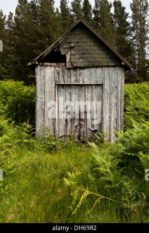An abandoned rusting bicycle in green undergrowth leaning against a wooden shed - Stock Photo