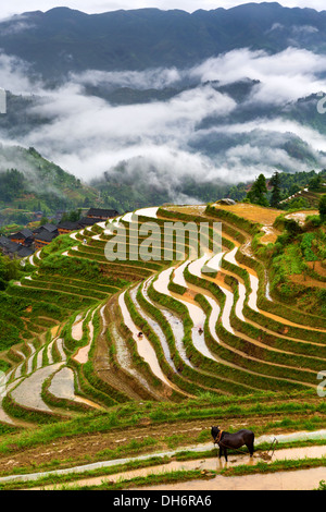 View of Longji rice terraces in Guangxi province, China - Stock Photo