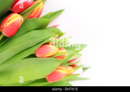 flowers, beautiful pink tulip isolated on white background - Stock Photo