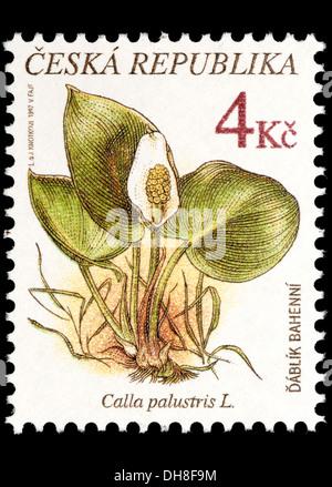 Czech Republic postage stamp: Flower - Bog Arum / Marsh Calla / Wild Calla / Water-arum (Calla palustris) - Stock Photo