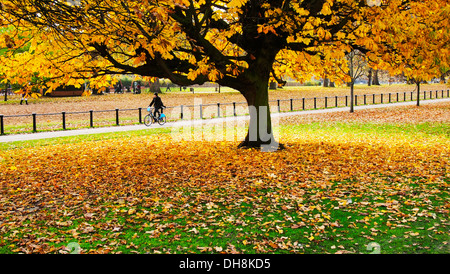 Brightly colored tree in autumn at London Hyde Park with a man riding a bike in the background - Stock Photo