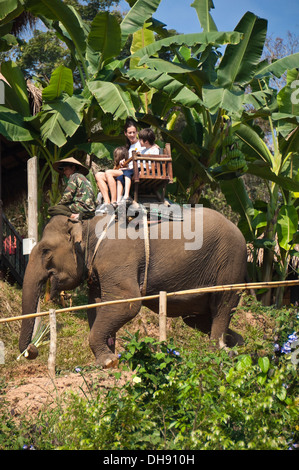 Vertical close up of Western tourists on an elephant trek in Laos. - Stock Photo
