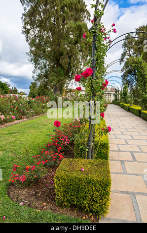 Beautiful Rose Garden of the Huntington Library. - Stock Photo