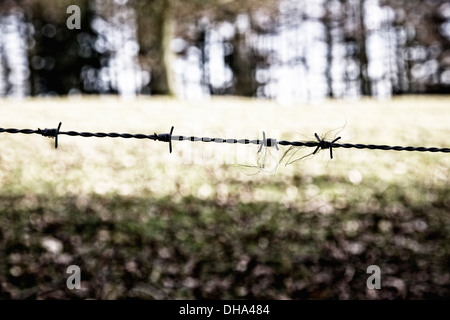 Close-up of animal hair on barbed wire with woodland out of focus in the background. - Stock Photo