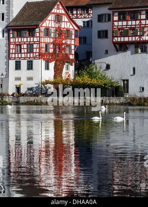 Typical Swiss house reflected on Rhine river with swans, Eglisau, Switzerland. - Stock Photo