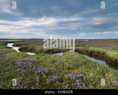 Sea lavender on the saltmarshes at Burnham Deepdale,Norfolk, England - Stock Photo