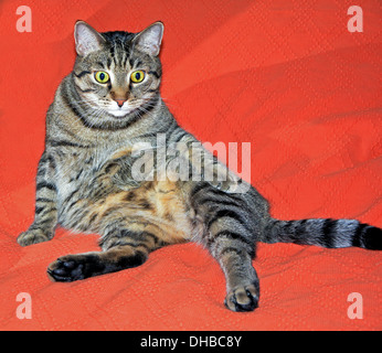 Cute cat relaxes on a red bed - Stock Photo