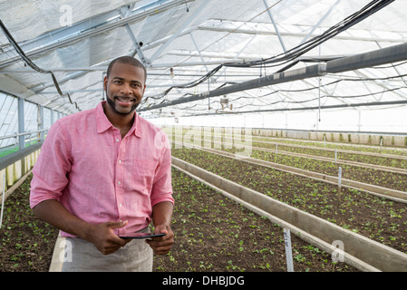 A commercial greenhouse in a plant nursery growing organic flowers. A man holding a digital tablet. - Stock Photo