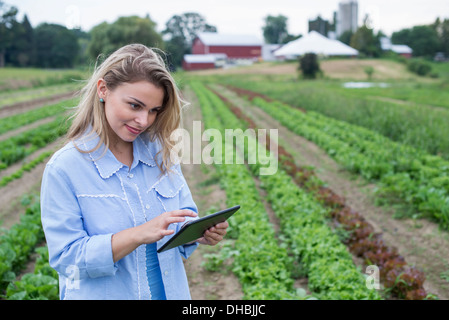 An organic farm growing vegetables. A woman in the fields inspecting the lettuce crop, using a digital tablet. - Stock Photo