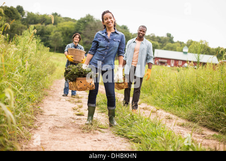Three people working on an organic farm. Walking along a path carrying baskets full of vegetables. - Stock Photo