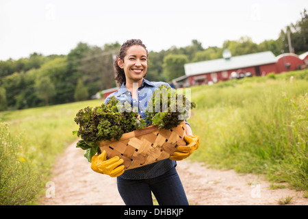 Working on an organic farm. A woman holding a basket full of fresh green vegetables, freshly picked. - Stock Photo