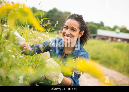 Woman working on an organic farm. Wearing gloves Admiring tall flowering plants. - Stock Photo