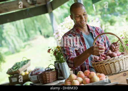 A farm stand with fresh organic vegetables and fruit.  A man sorting beetroot in a basket. - Stock Photo