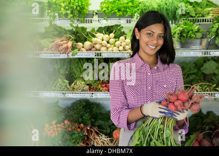 A farm stand with rows of freshly picked vegetables for sale. A woman holding a bunch of carrots. - Stock Photo