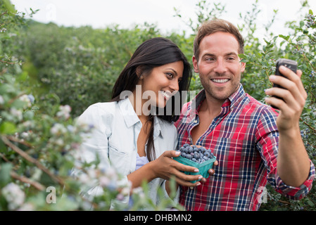 Blueberry plants bearing fruit. Two people among the bushes, taking a selfy with a smart phone. - Stock Photo