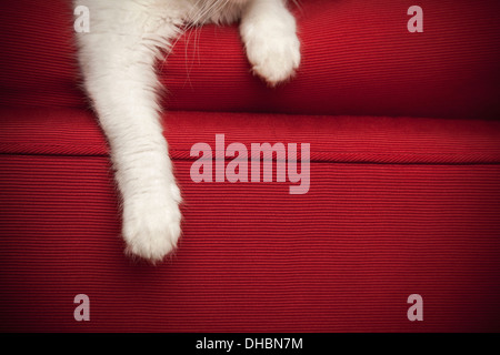 A kitten on a red sofa.  View of the front legs and paw. - Stock Photo