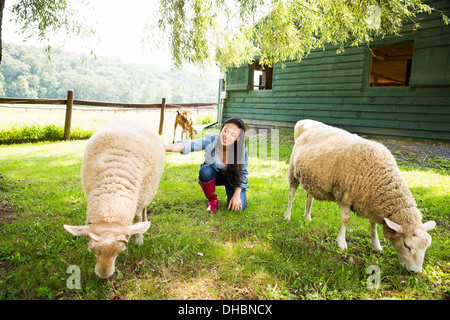 An organic farm in the Catskills. A woman with two large sheep grazing in a paddock. - Stock Photo