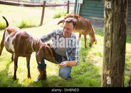 An organic farm in the Catskills. A man in a paddock with two large goats. - Stock Photo