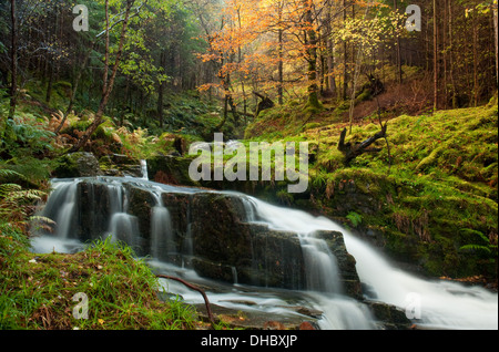 Waterfall through Lael Forest - Stock Photo