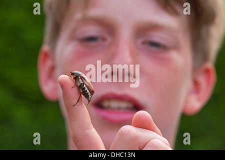 Curious boy looking at common cockchafer / May bug (Melolontha melolontha) on hand