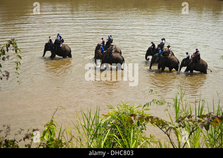 Horizontal view of a local Lao mahouts with tourists on elephants walking along a river in Laos. - Stock Photo