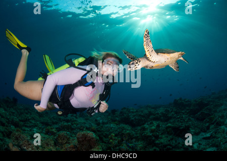 A female scuba diver swims with a hawksbill turtle - Stock Photo