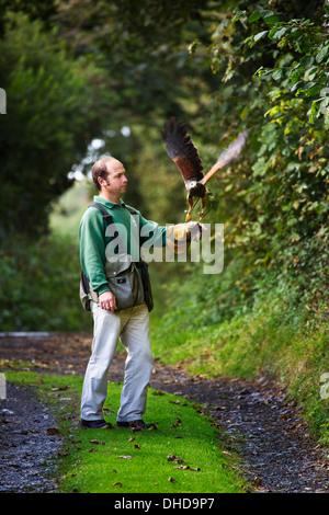 A Falconer training his Harris hawk  in the westcountry UK - Stock Photo