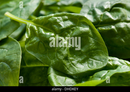 Close up of baby spinach leaves - Stock Photo