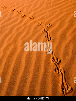 Tracks in the sand dunes, NamibRand Nature Reserve, Namib Desert, Namibia, Africa - Stock Photo