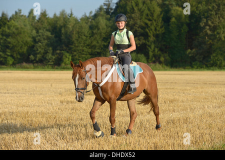 Thirteen-year-old girl wearing a helmet and a back protector on back of an Irish Sport Horse pony riding in a stubble - Stock Photo