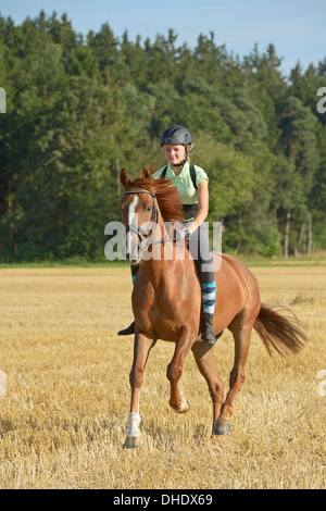 Thirteen-year-old girl wearing a helmet and a back protector bareback on an Irish Sport Horse pony galloping in - Stock Photo