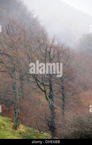 Snow blizzard sweeping wooded ridge in the Pyrenees mountains in late autumn, Roncesvalles, Navarre, Spain, November. - Stock Photo