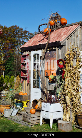 Autumn scenic of wood cottage decorated for halloween with orange pumpkins, flowers and scarecrow . USA - Stock Photo