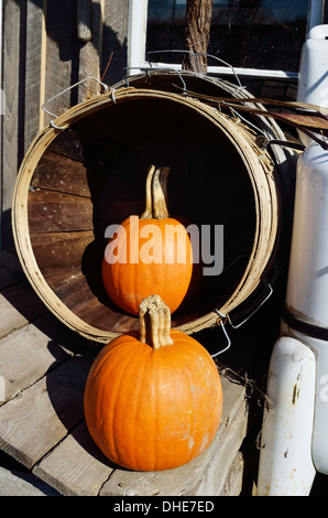 Autumn New England scene of 2 orange pumpkins outdoors on wooden bench in basket tipped on side. Massachusetts, - Stock Photo